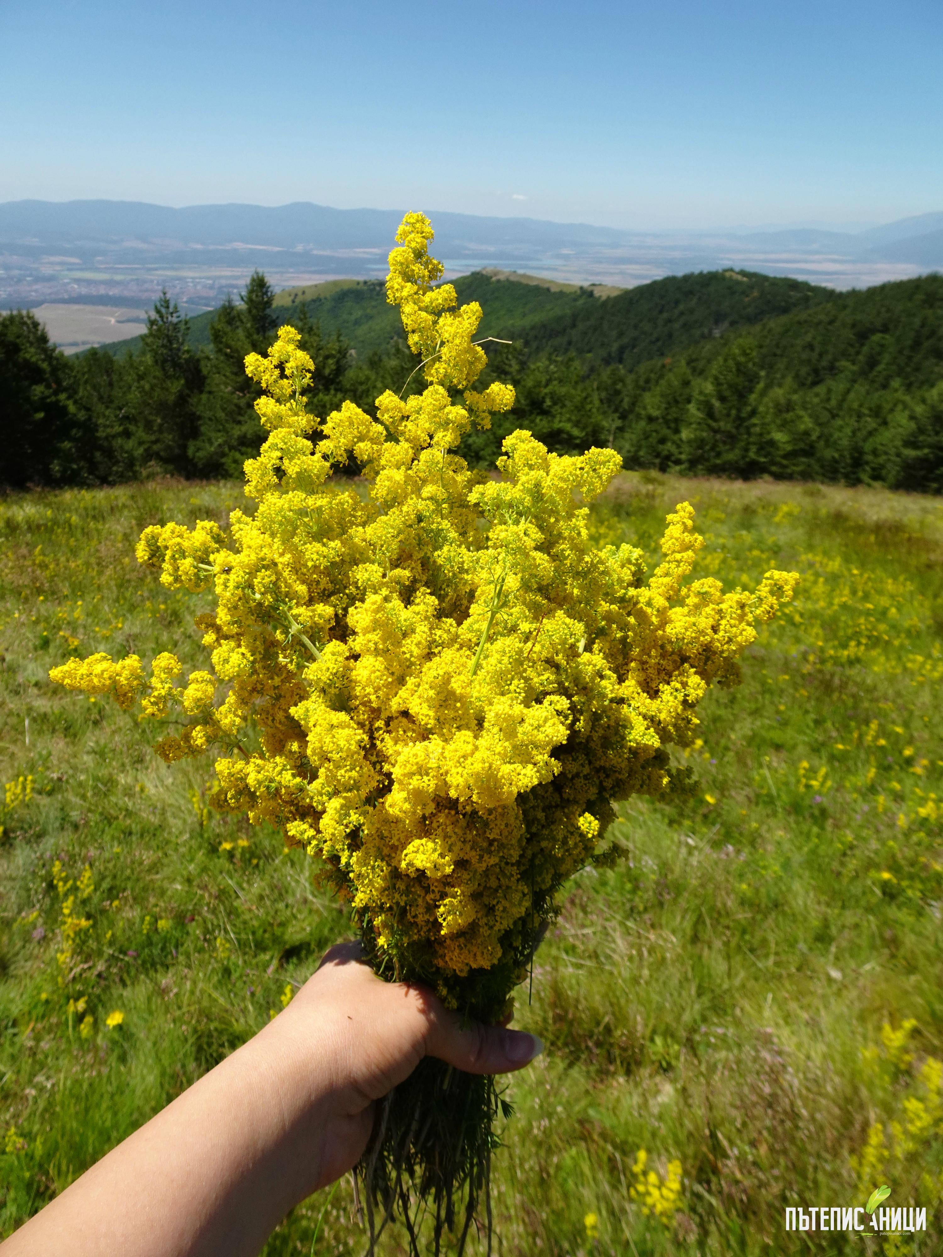 Саръяр, връх, Жълти бряг, Стара планина