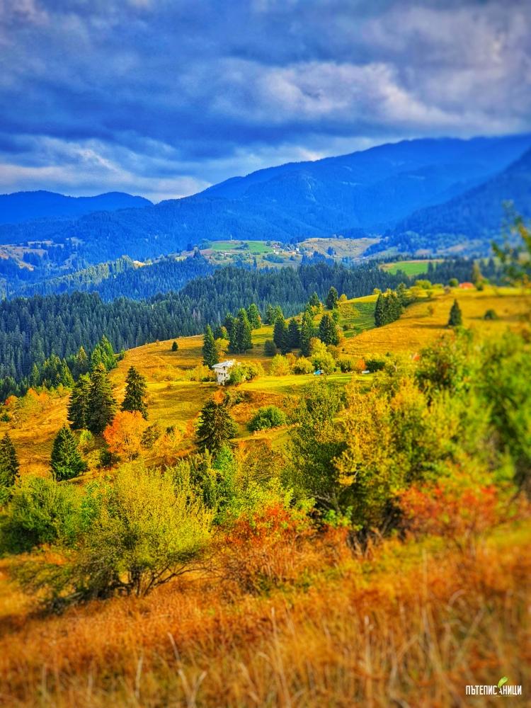 Гела, есен
